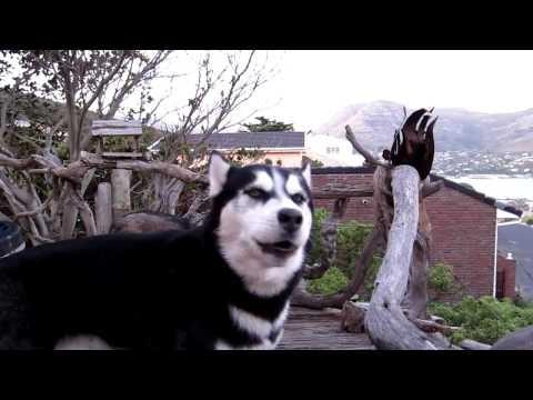 Reakcja-psow