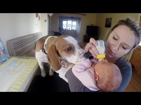 Psa-mozna-nauczyc-wszystkiego