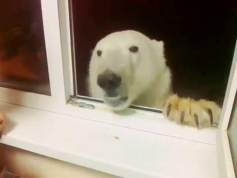 Zimowe-dokarmianie-zwierzat-bardzo-wazne